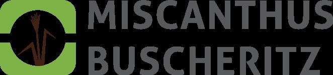 Miscanthus Buscheritz